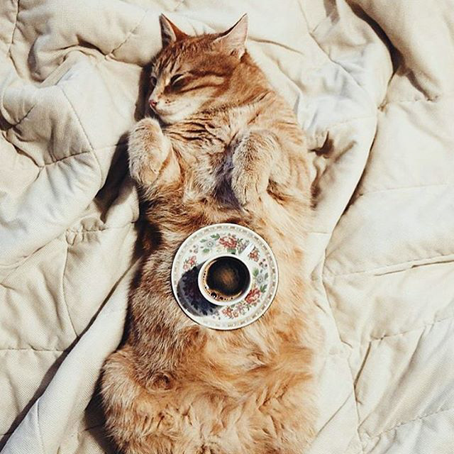 @kittiesncoffee cats and coffee kitties instagram interview sprudge